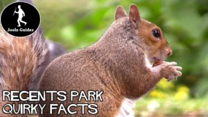 Regents Park – Quirky Facts and Feeding Squirrels
